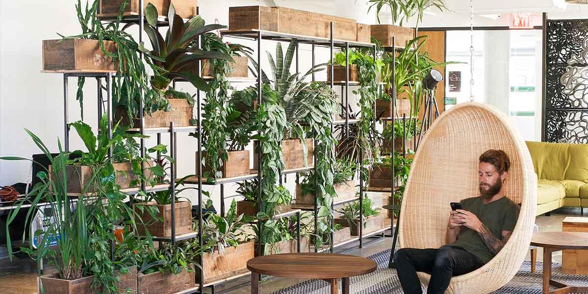 Office plants in an open work area.